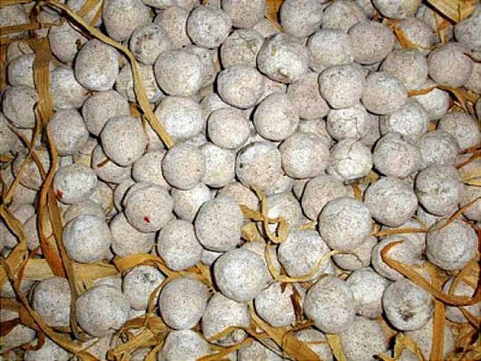Men nấu rượu ngô Thanh Vân được làm từ 36 loại lá thuốc