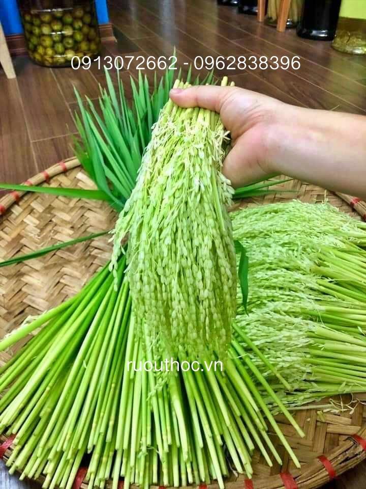 Đòng đòng mới nhú ra khỏi bẹ lúa vừa có tinh bột, vừa nhiều sữa ngâm sẽ ngon nhất.