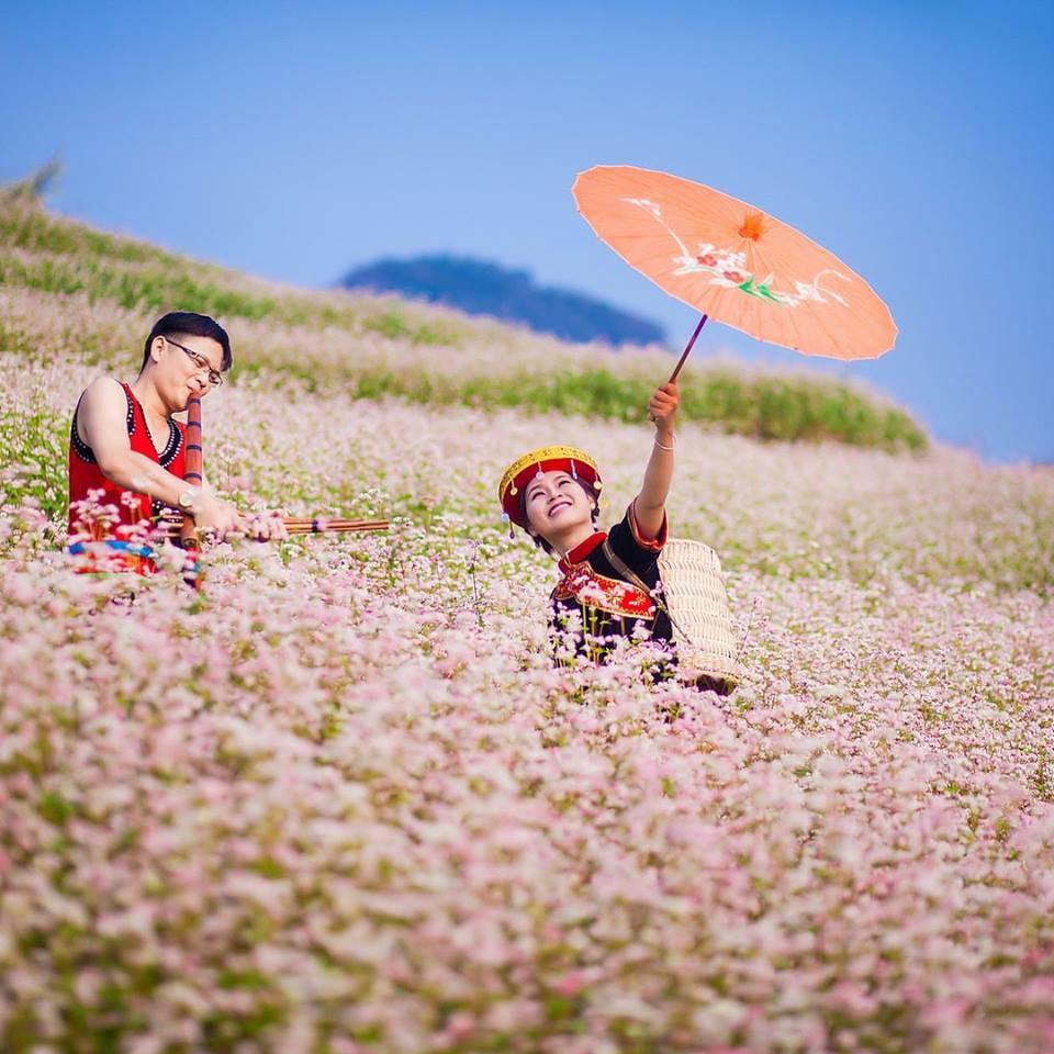 Hoa tam giác mạch rất đẹp, hoa chính là biểu trưng của du lịch Hà Giang.